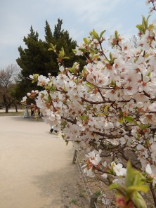 Garden at Gyeongbokgung